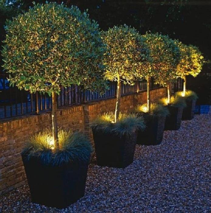 Небольшие деревья с подсветкой - важный элемент ландшафтного дизайна.