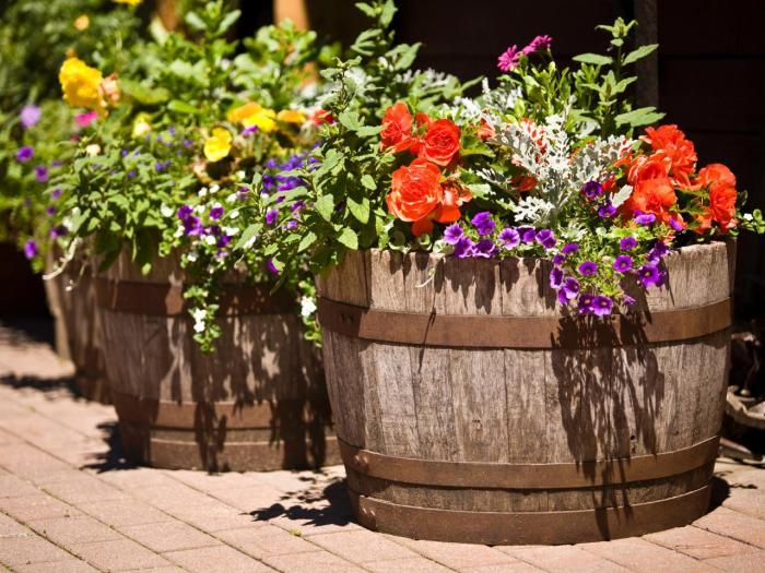 Кашпо для цветов и растений из обрезанной пополам деревянной бочки.
