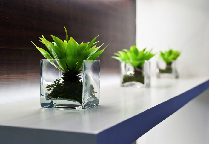 Маленькие стеклянные кашпо в форме бокалов, которые станут эффективными украшениями в интерьере.
