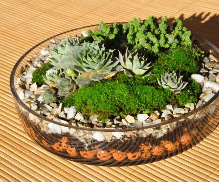 Декоративная альпийская горка в обычной стеклянной тарелке.