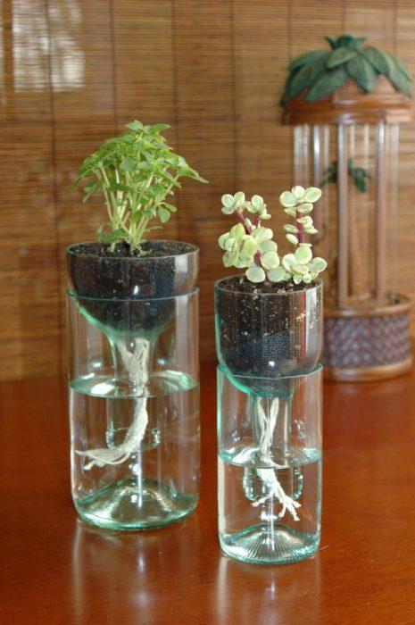 Кашпо из стеклянных бутылок с уникальной системой автоматической поливки растений.