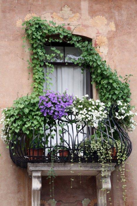 Наиболее популярный вариант озеленение небольшого балкона открытого типа.