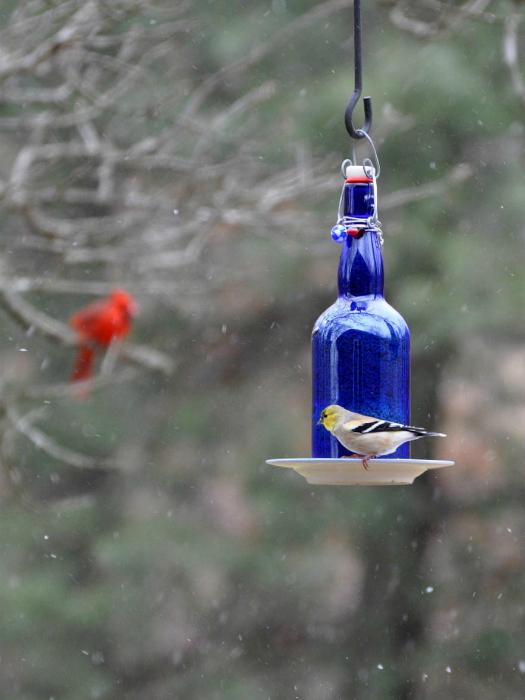 Создание кормушки из стеклянной бутылки - наиболее простое и быстрое решение.