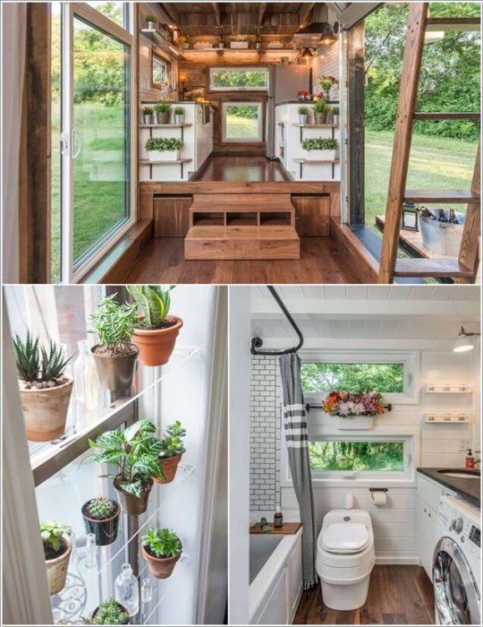 Для озеленения помещений небольших размеров идеально подходят классические комнатные растения.