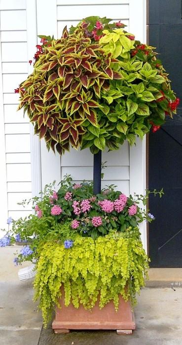 Цветущее дерево у входа в дом, которое привлечет к себе внимание гостей.