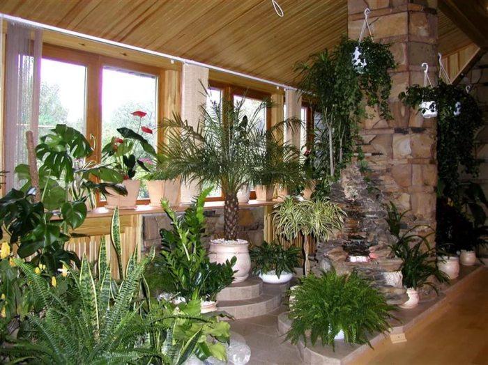Правильно подобранные растения способны облагородить даже самый скромный интерьер.