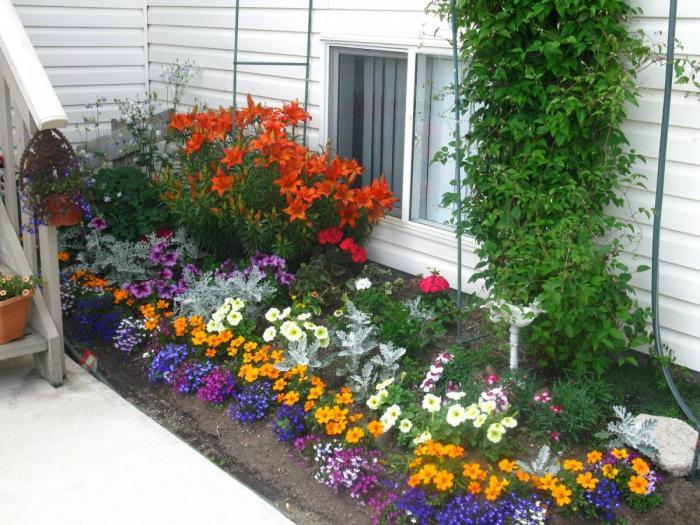 Яркая весенняя клумба из разноцветных однолетних цветов.