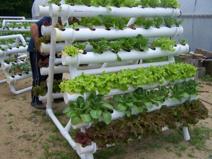 Вертикальная грядка из поливинилхлоридных труб отлично впишется в интерьер садового участка.
