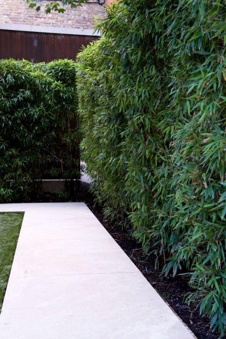 Оптимального сочетания архитектурной формы и озеленения приусадебного участка.