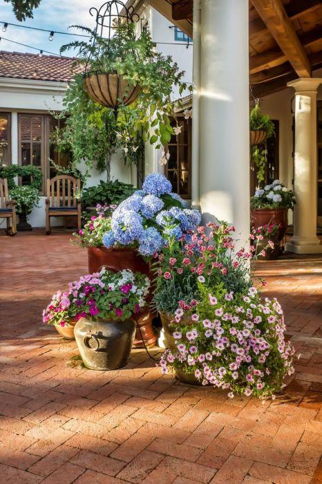 Пышные растения, которые будут радовать хозяев всё лето.