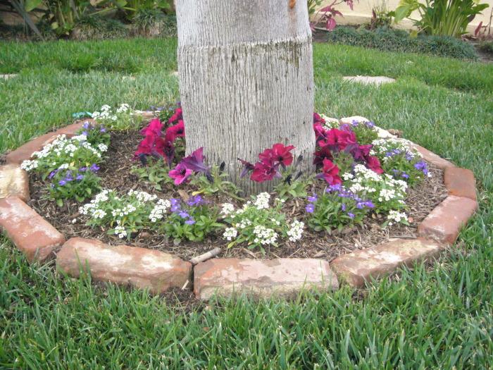 Красивая клумба, огражденная старыми кирпичами, которые завалялись в саду.