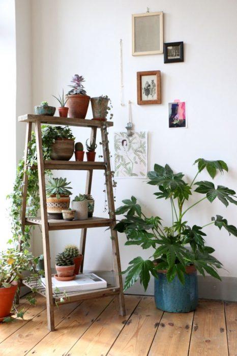 Живые растения, размещенные на старой деревянной лестнице в углу гостиной комнаты.