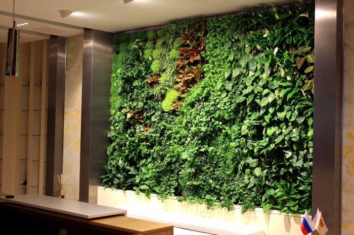 Вертикальный ботанический сад, занимающий часть стены в кабинете.