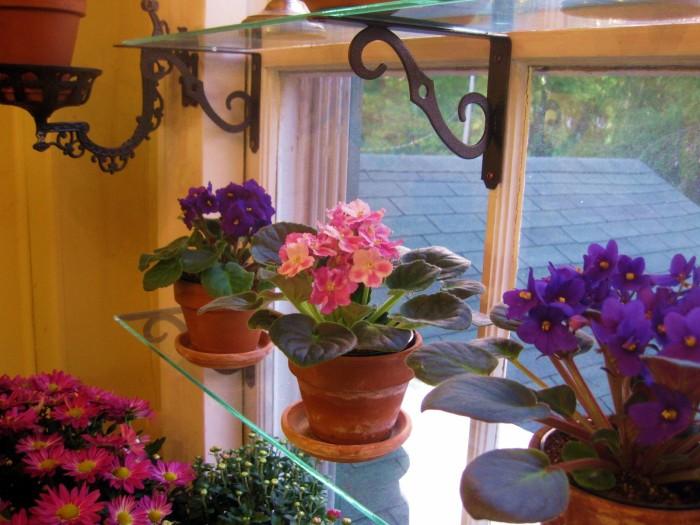 Фиалки будут себя чувствовать гораздо уютнее на стеклянных полках, прикрепленных к окну.