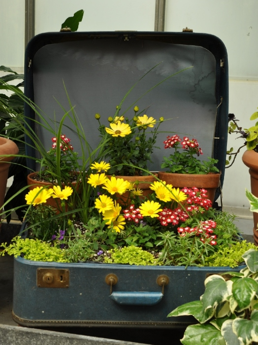 Старый чемодан можно использовать в качестве уличного кашпо для цветов.