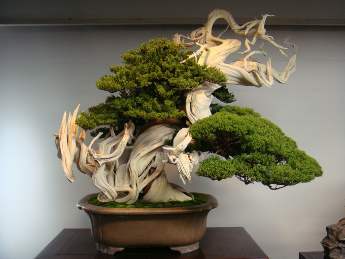 Искусство выращивания миниатюрных деревьев может освоить каждый.