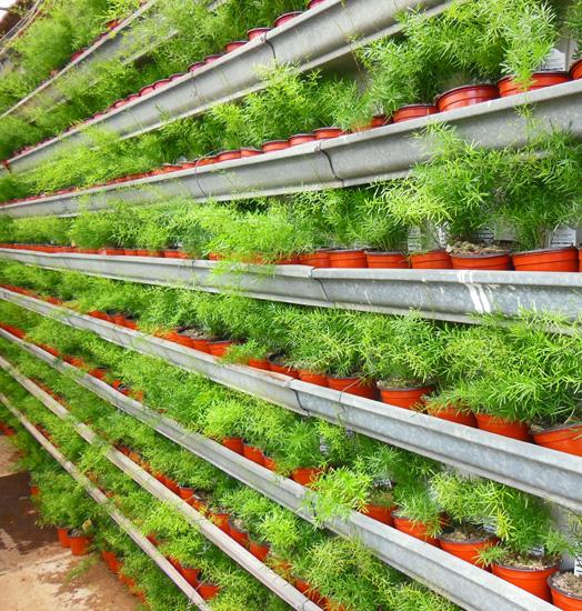 Подвесные пластиковые рамки-контейнер для вертикального озеленения.