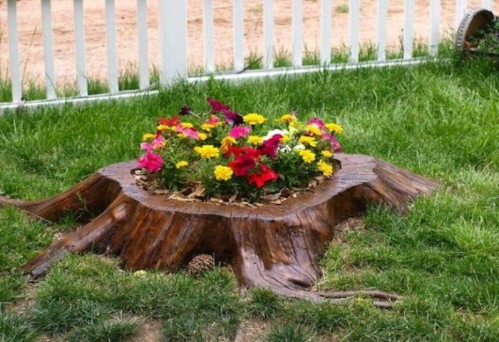 Из пня может получится отличная клумба, которую можно использовать для декорирования дачного участка.