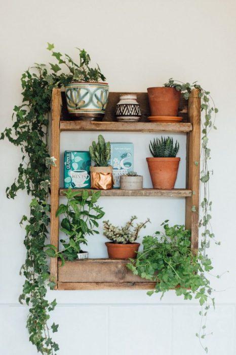Настенная полка из дерева послужит отличным местом для живых комнатных растений.