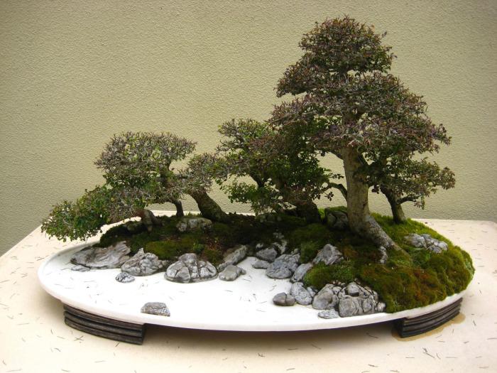 Стиль, имитирующий группу деревьев, выращенных в плоском горшке.