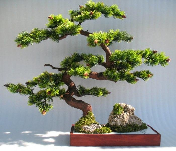 Утонченные изгибы декоративного дерева бонсай.