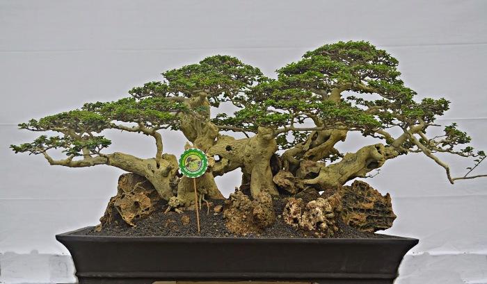 Один из традиционных стилей бонсай, напоминающий упавшее в болото дерево.