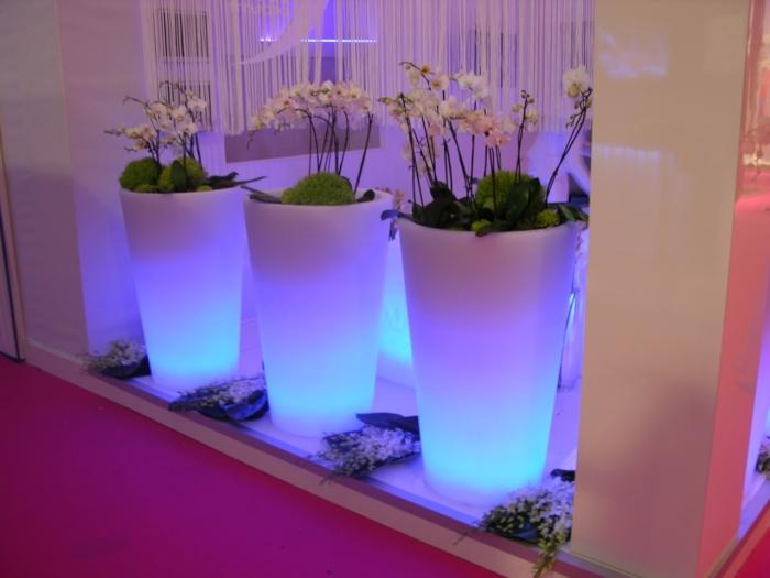 Оригинальные способы показать гостям ваши комнатные растения.