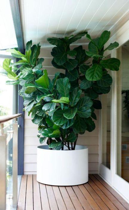 Растения и деревья способны повышать влажность воздуха в любом помещении.