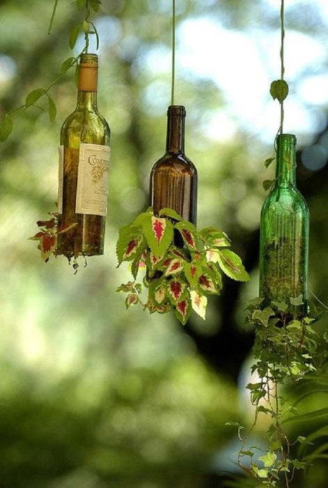 Бутылки могут стать отличным кашпо для живых растений.