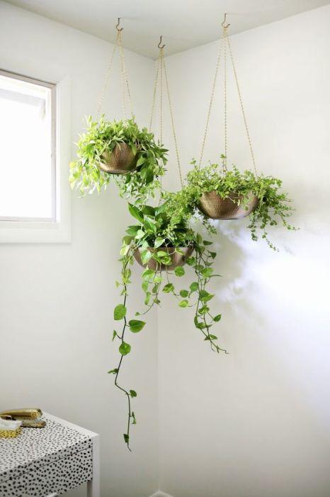 Подвесные кашпо в углу кухни станут прекрасным местом для размещения домашних растений.