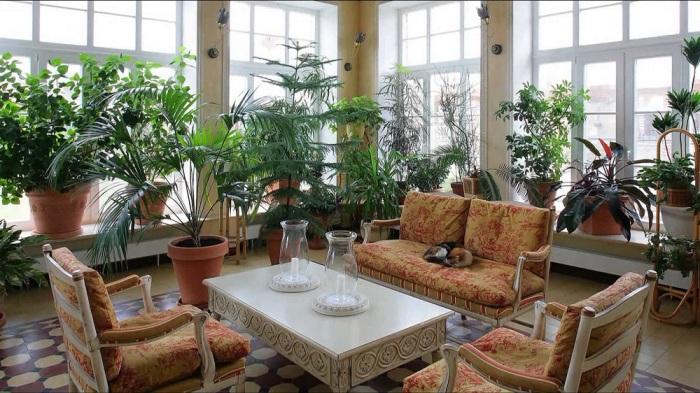 Интересное сочетание разных видов комнатных растений в зимнем саду.