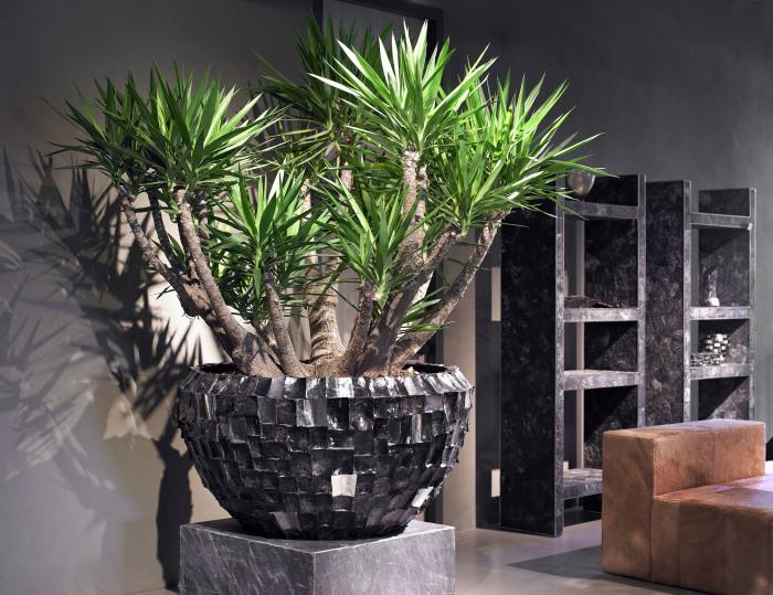 Большое растение на поддоне делает интереснее минималистский интерьер любой комнаты.