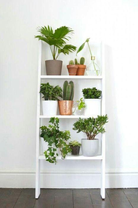 Деревянная лестница может стать самым недорогим и доступным материалом для того, чтобы быстро преобразить пространство и создать отличное место для комнатных растений.