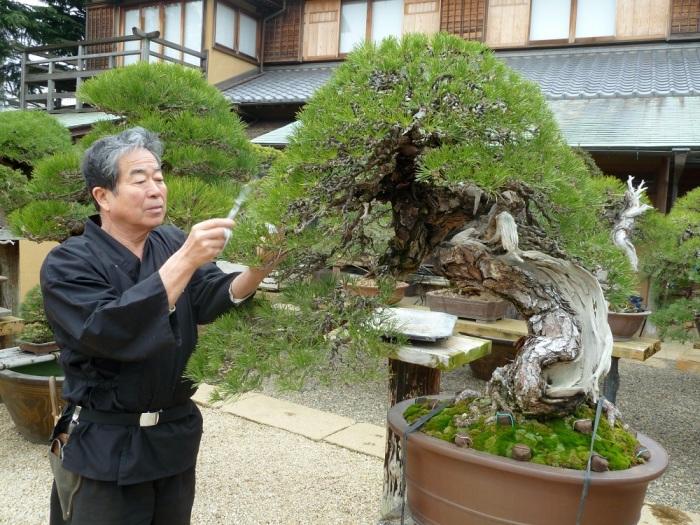 Японцы - мастера в искусстве выращивания точной копии настоящего дерева.