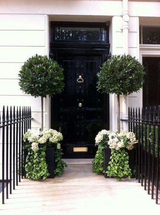 Еще один вариант озеленения парадного входа цветущими растениями и декоративными деревьями.