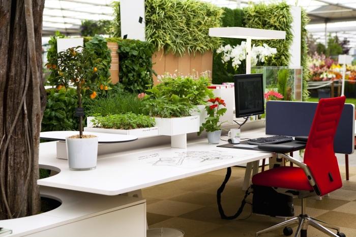 Растения позволят вам расслабится даже в самые тяжелые рабочие будни.