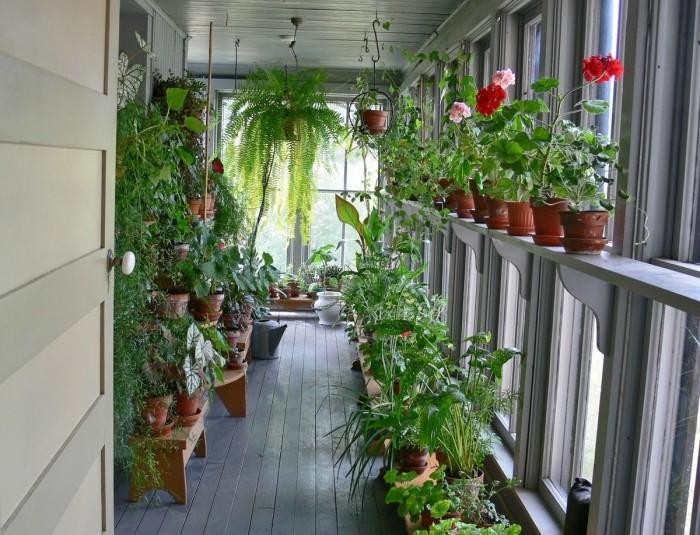 Тропический зимний сад на лоджии, в котором выдержаны основные правила фитодизайна.