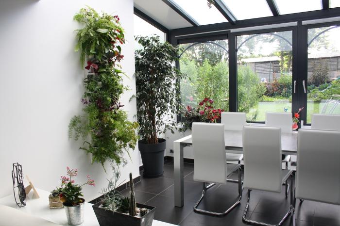 Растения значительно улучшают качество воздуха в помещении.