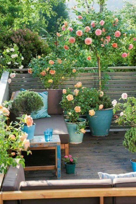 Розы способны украсить и оживить любой уголок на территории загородного дома.