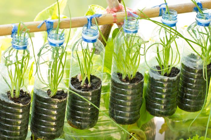 Подвесные кашпо из пластиковых бутылок - быстрое и экономное решение для садового участка.
