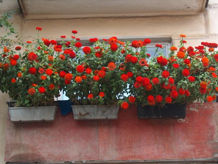 Старый балкон открытого типа можно украсить яркими многолетними цветами.