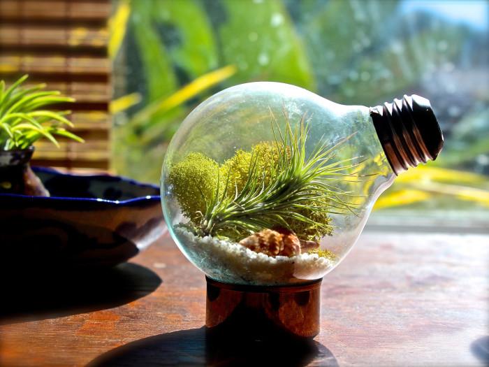 Маленький сказочный террариум в лампочке - необычное и креативное дополнение.
