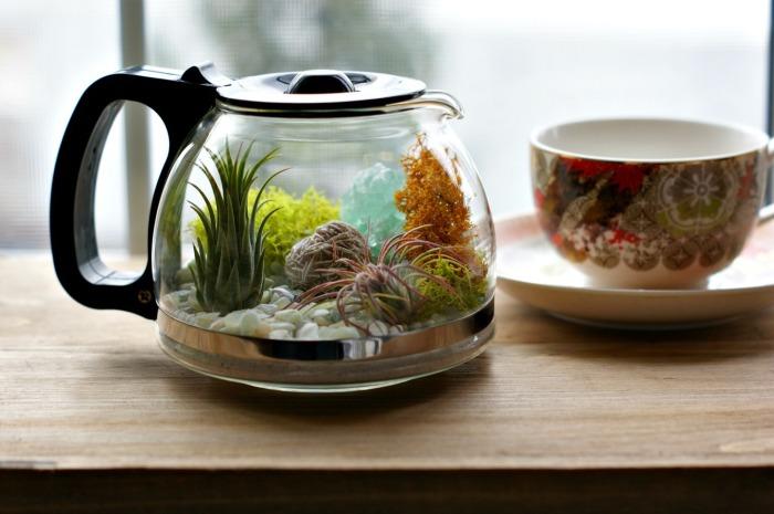 Фантастический террариум, созданный в стеклянном чайнике.