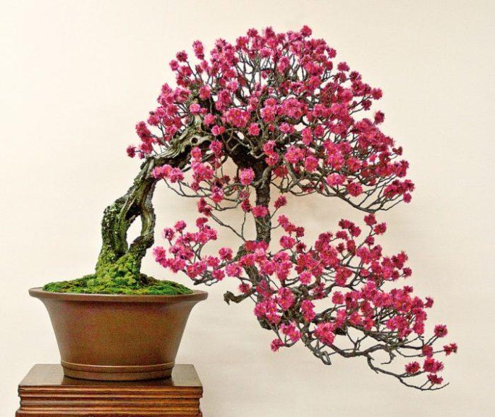 В восточной культуре бонсаи - это не просто комнатные растения, это целая философия.
