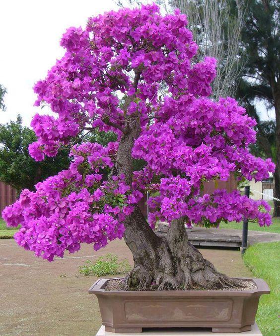 Удивительная композиция из двух стволов создающая красивое дерево.