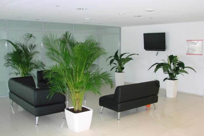 Высокие белые кашпо эффектно смотрящиеся в интерьере гостиной комнаты.