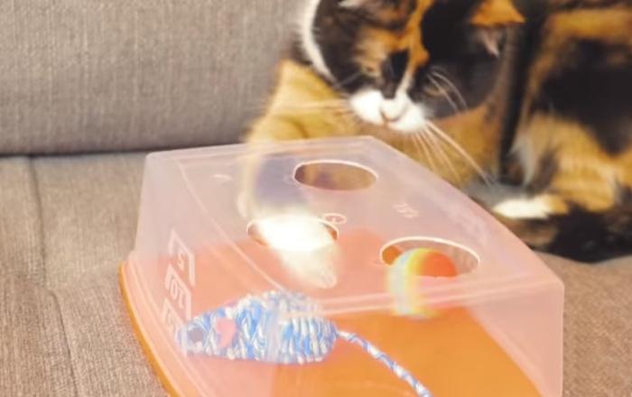 Полезные вещи для кота.