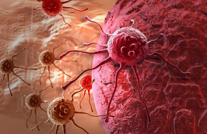 Некоторые животные демонстрируют поразительную устойчивость к раку.