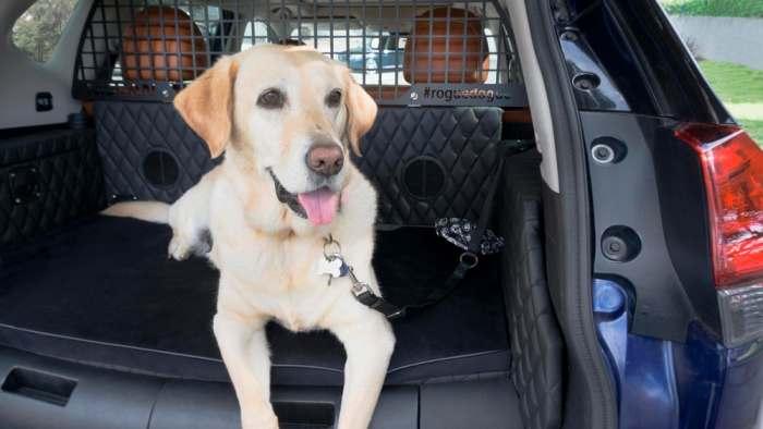 Багажник для пса.