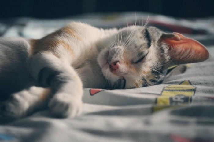 Сон - залог здоровья и хорошего настроения.